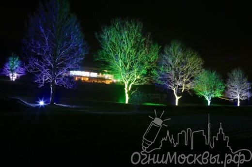 Архитектурная подсветка деревьев